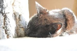 Metering Modes Spot Metering - Cat